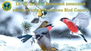 Долучайтеся до Всеукраїнської природоохоронної акції «Великий зимовий облік птахів» (18-25 січня 2021 р.)
