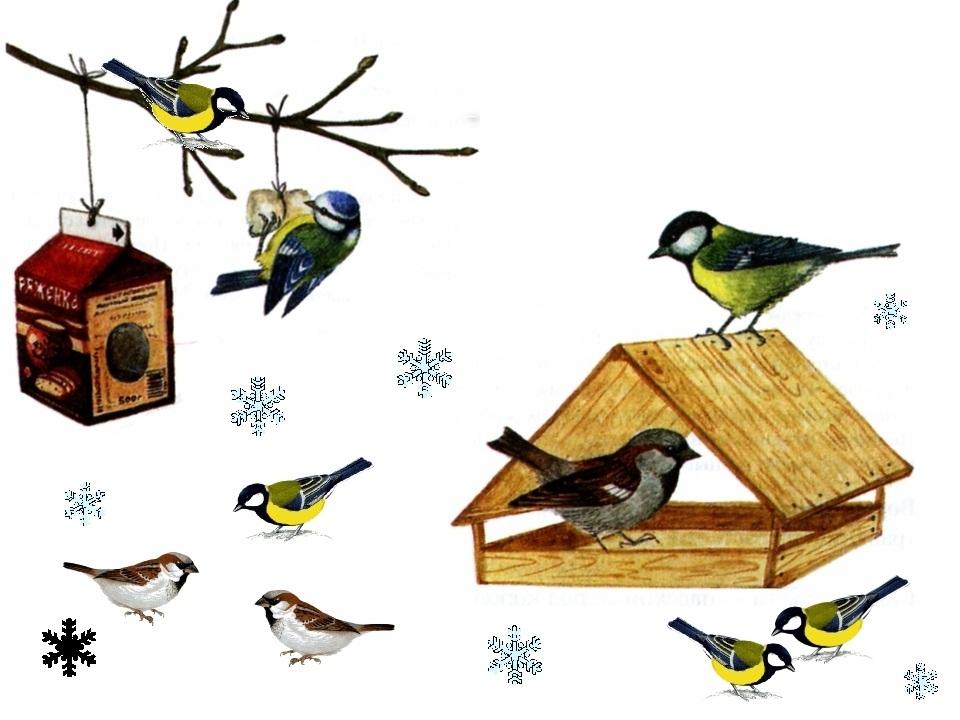 Зима – найважчий час у житті птахів