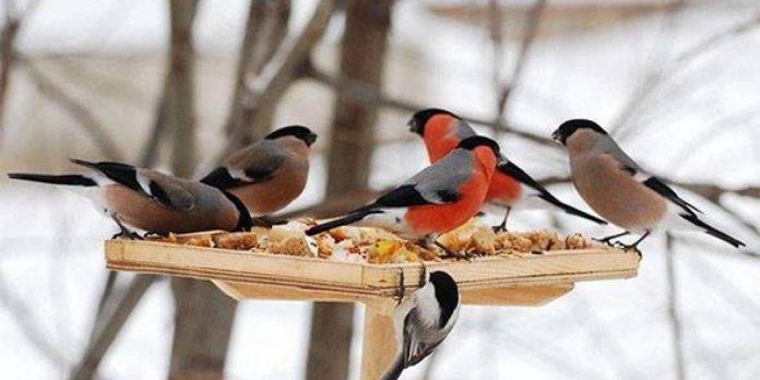 Підсумок акції «Великий зимовий облік птахів»